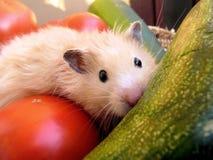 Hamster syrien parmi des légumes Photos libres de droits