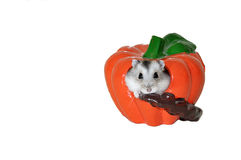 Hamster In the toy of pumpkin Royalty Free Stock Photos