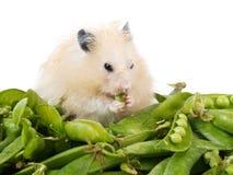 Hamster und Erbsen Stockfotografie