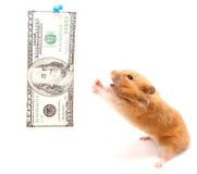 Hamster und Geld Stockbild