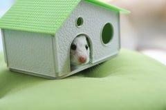 Hamster und Haus Lizenzfreies Stockbild