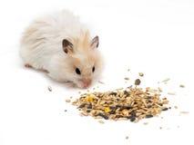 Hamster und Körner Stockfotografie