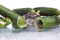 Hamster und Nahrung Lizenzfreies Stockfoto