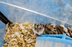 Hamster wheel and hamsters