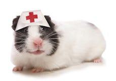 Hamsterdierenarts Stock Foto