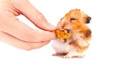 Hamsteressen Lizenzfreies Stockbild