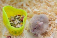Hamsteressen lizenzfreies stockfoto