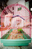 Hamsters in Cage. A group of hamsters in a cage trying to break free Royalty Free Stock Photos