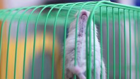 Hamsters in a cage Stock Photos
