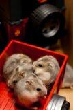 Hamsters in een stuk speelgoed van de Jeepaanhangwagen Stock Afbeelding