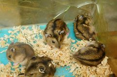Hamsters are playing. They are funny and cute.