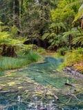 Hamurana balza @ il Distretto di Rotorua, Nuova Zelanda Immagini Stock Libere da Diritti