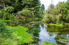 Hamurana Spring in Rotorua, New Zealand. royalty free stock photo