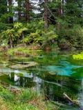 Hamurana Springs @ Rotorua, New Zealand. Nice blue spring water at the Hamurana Springs in Rotorua, New Zealand Royalty Free Stock Image