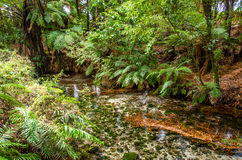 Hamurana vår i Rotorua, Nya Zeeland Royaltyfri Fotografi