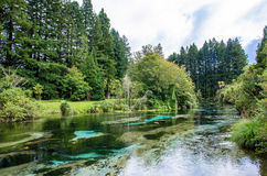Hamurana vår i Rotorua, Nya Zeeland Royaltyfri Foto