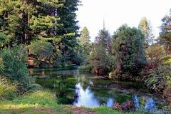Hamurana wiosen rezerwa, Auckland, Nowa Zelandia Fotografia Royalty Free