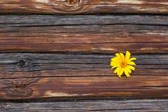 Han blommar på väggen Royaltyfria Foton