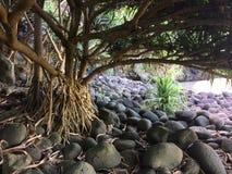 Hanakapiai plaża na Na Pali wybrzeżu na Kauai wyspie Hawaje, Kalalau ślad, - Obraz Royalty Free