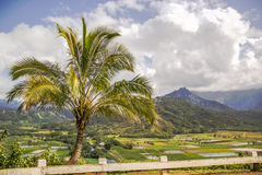 Hanalei Lookout Royalty Free Stock Image