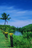 Hanalei River. View of the peaceful Hanalei River which is found on the north side of Kauai, Hawaii Royalty Free Stock Photos