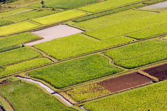 Hanalei Tal-und Wasserbrotwurzel-Felder Lizenzfreie Stockfotografie