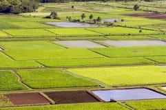 Hanalei Tal-und Wasserbrotwurzel-Felder Lizenzfreies Stockfoto