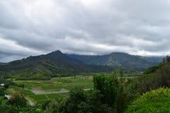 Hanalei taro Dolinni pola w Kauai Hawaje Obrazy Royalty Free