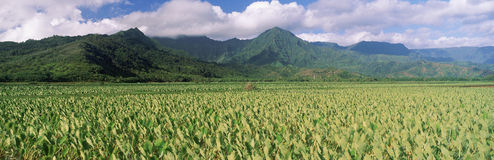 Hanalei Valley Royalty Free Stock Photography