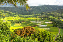 Hanalei Valley, Hawaii Stock Photography