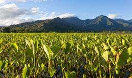 Hanalei Valley in Kauai Stock Images