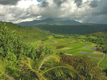 Hanalei Valley, Kauai Stock Images