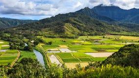 Hanalei Valley Panorama. Taro fields in beautiful Hanalei Valley, Kauai Royalty Free Stock Photography
