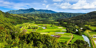 Hanalei Valley Panorama. Taro fields in beautiful Hanalei Valley, Kauai Stock Images