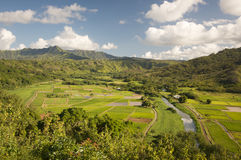 Hanalei Valley and Taro Fields Stock Images