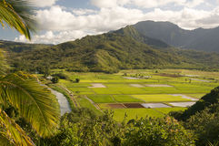 Hanalei Valley and Taro Fields Royalty Free Stock Image