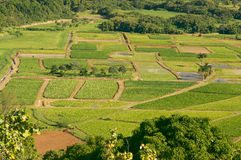 Hanalei Valley and Taro Fields Stock Photos