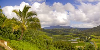 Hanalei Wildlife Preserve on Kauai Royalty Free Stock Photography