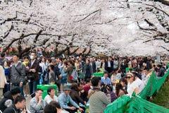 Hanami党在上野公园,东京 库存照片