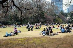 Hanami à Tokyo, Japon Images libres de droits