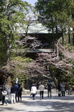 Hanami do templo Imagem de Stock Royalty Free