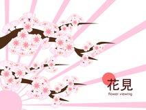 Hanami 2018 - enkla Cherry Blossom Branch på strålar Royaltyfri Fotografi