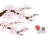 Hanami 2018 - enkla stora Cherry Blossom Branch Arkivfoton