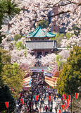 Hanami festival Royalty Free Stock Images