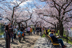 Hanami festival Stock Photos