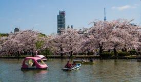 Hanami festival Stock Image