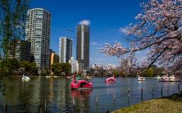 Hanami festival Royalty Free Stock Image