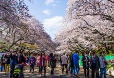 Hanami festival Royalty Free Stock Photography