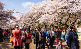 Hanami festival Royalty Free Stock Photos