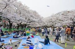 Hanami festival in Ueno park. Stock Image
